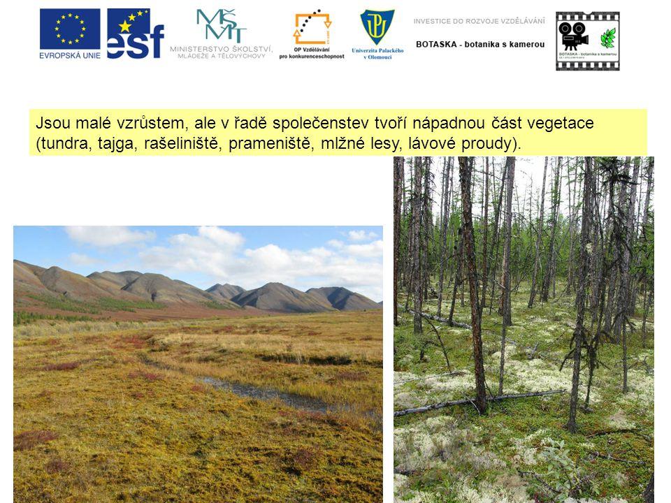 Jsou malé vzrůstem, ale v řadě společenstev tvoří nápadnou část vegetace (tundra, tajga, rašeliniště, prameniště, mlžné lesy, lávové proudy).