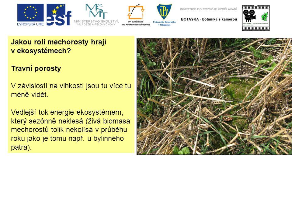 Jakou roli mechorosty hrají v ekosystémech.