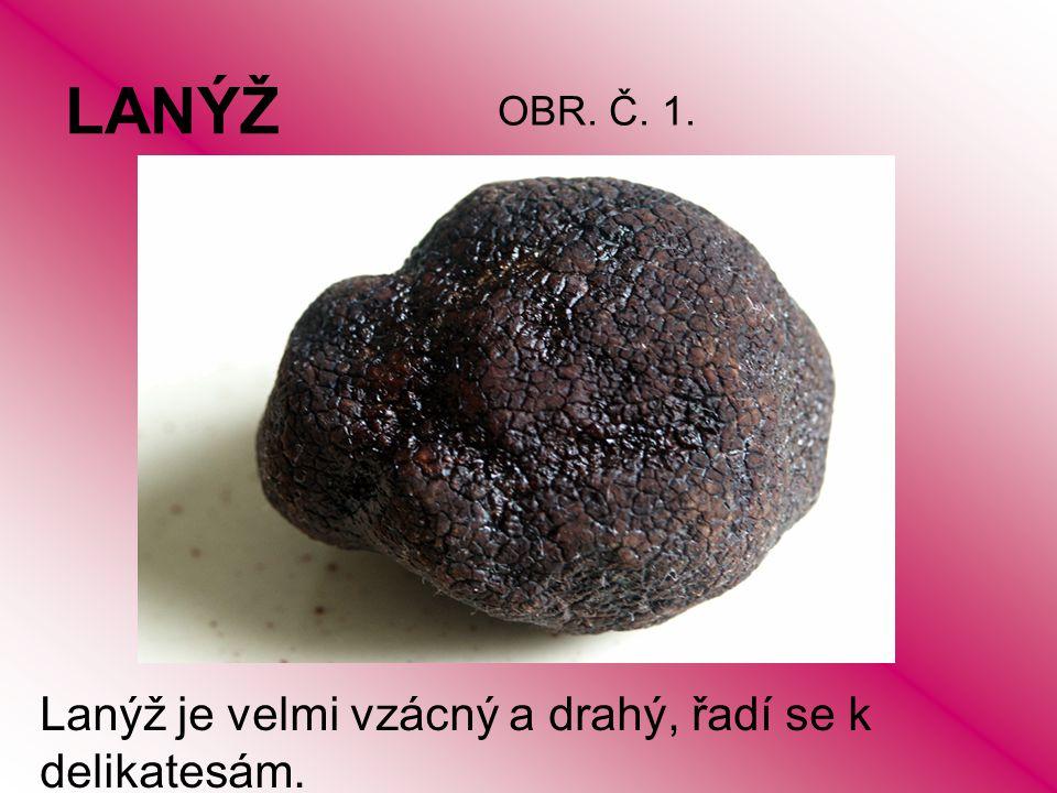 LANÝŽ Lanýž je velmi vzácný a drahý, řadí se k delikatesám. OBR. Č. 1.