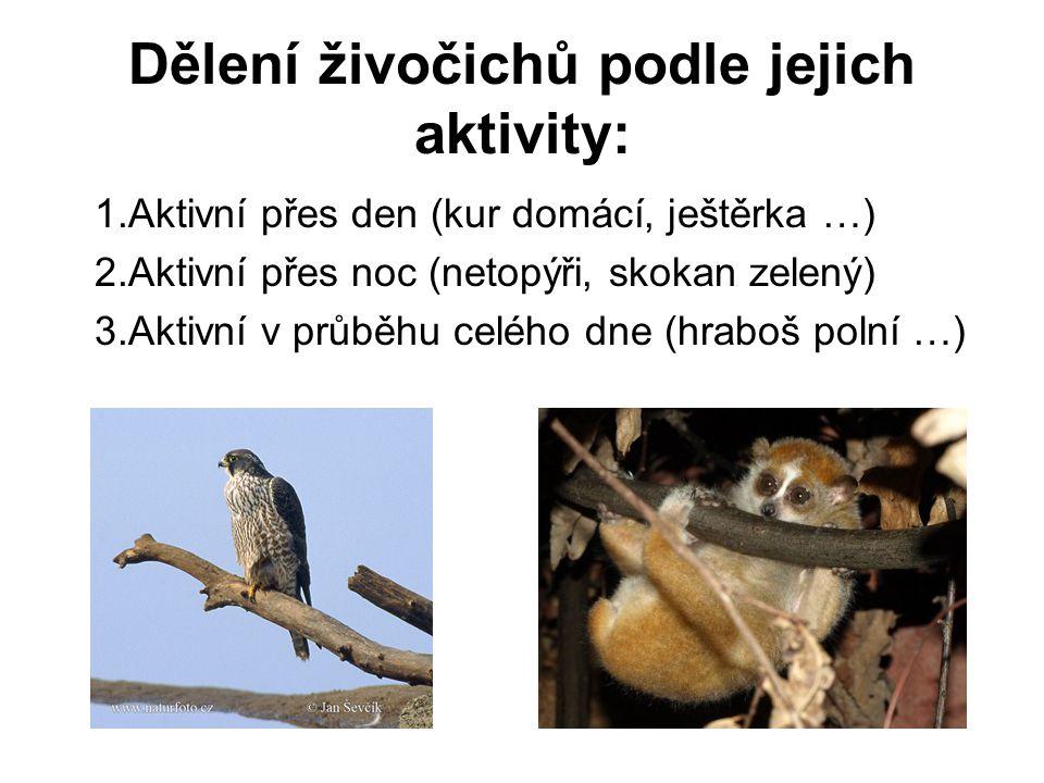 Dělení živočichů podle jejich aktivity: 1.Aktivní přes den (kur domácí, ještěrka …) 2.Aktivní přes noc (netopýři, skokan zelený) 3.Aktivní v průběhu celého dne (hraboš polní …)