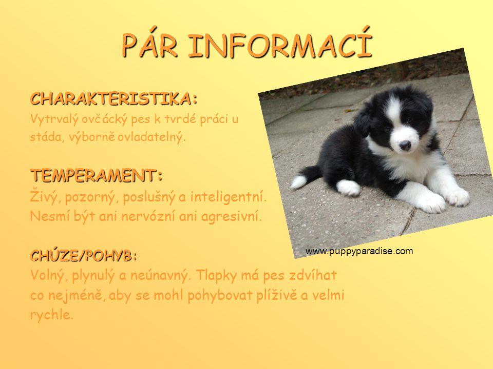 PÁR INFORMACÍ CHARAKTERISTIKA: Vytrvalý ovčácký pes k tvrdé práci u stáda, výborně ovladatelný.TEMPERAMENT: Živý, pozorný, poslušný a inteligentní.