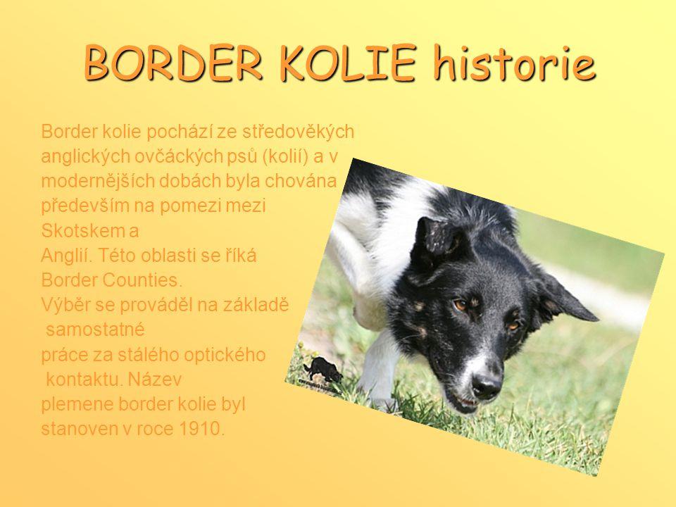 BORDER KOLIE historie Border kolie pochází ze středověkých anglických ovčáckých psů (kolií) a v modernějších dobách byla chována především na pomezi mezi Skotskem a Anglií.