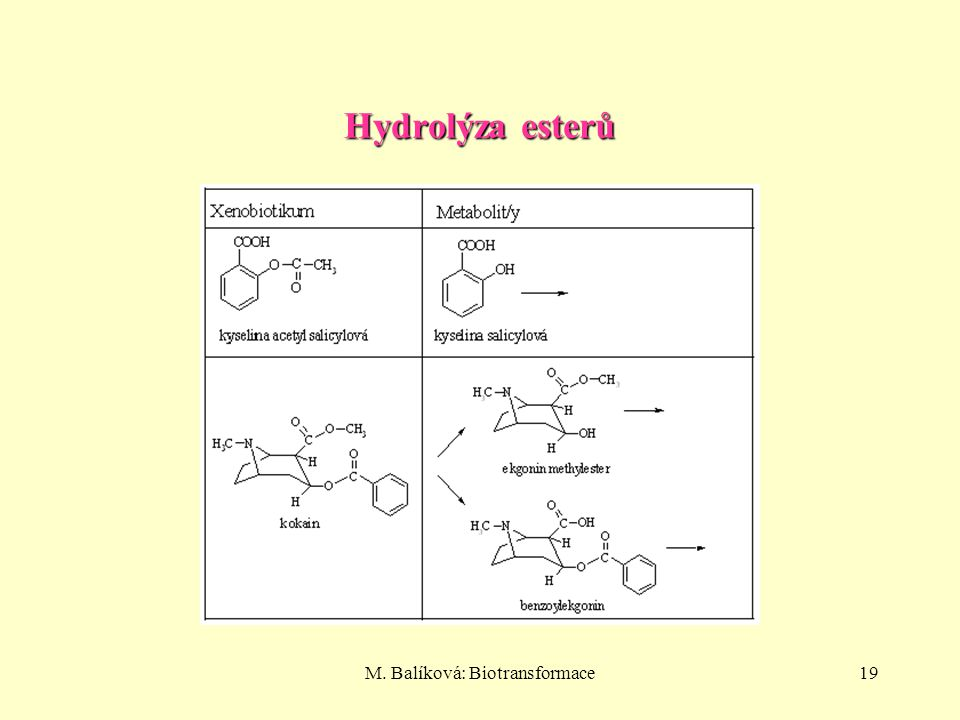 M. Balíková: Biotransformace19 Hydrolýza esterů