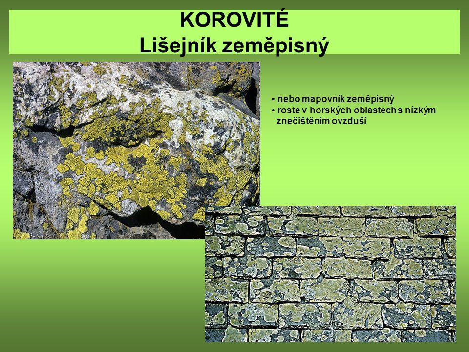 KOROVITÉ Lišejník zeměpisný nebo mapovník zeměpisný roste v horských oblastech s nízkým znečištěním ovzduší