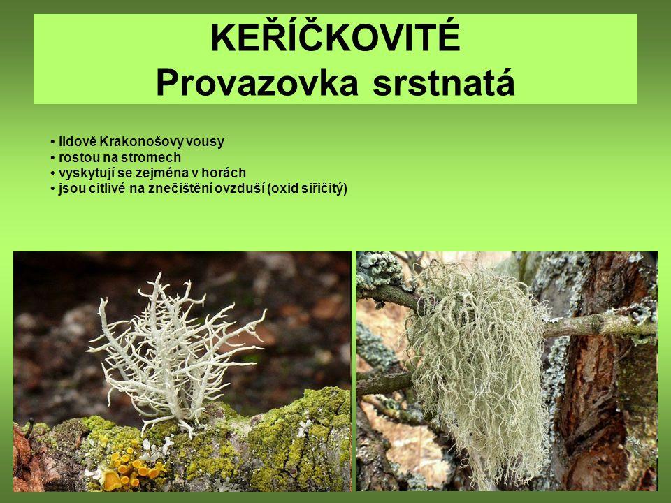 KEŘÍČKOVITÉ Provazovka srstnatá lidově Krakonošovy vousy rostou na stromech vyskytují se zejména v horách jsou citlivé na znečištění ovzduší (oxid siř