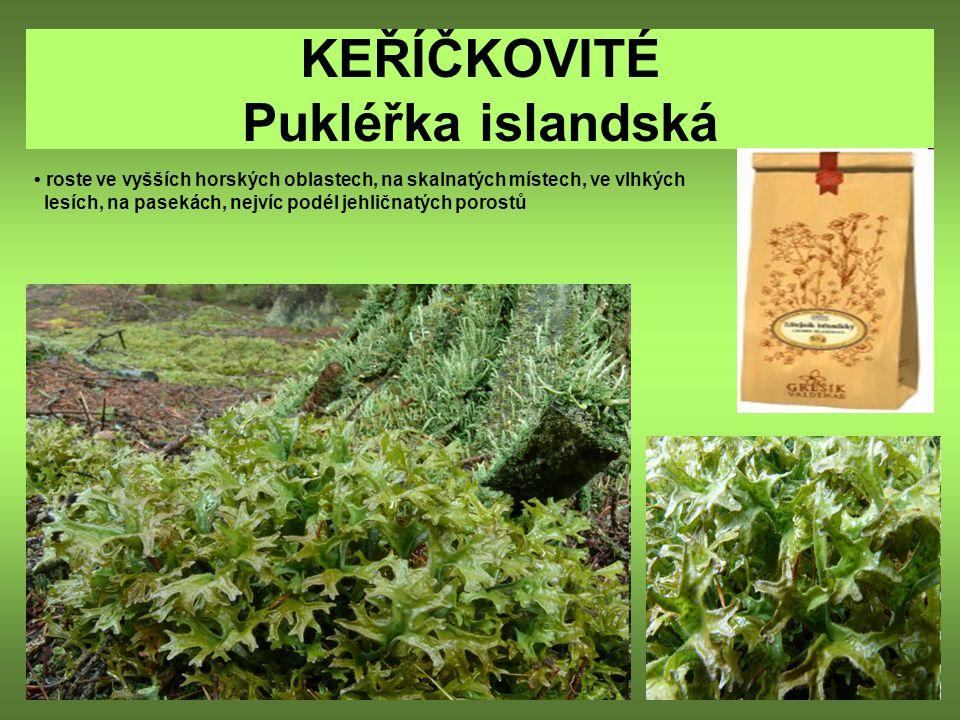 KEŘÍČKOVITÉ Pukléřka islandská roste ve vyšších horských oblastech, na skalnatých místech, ve vlhkých lesích, na pasekách, nejvíc podél jehličnatých p