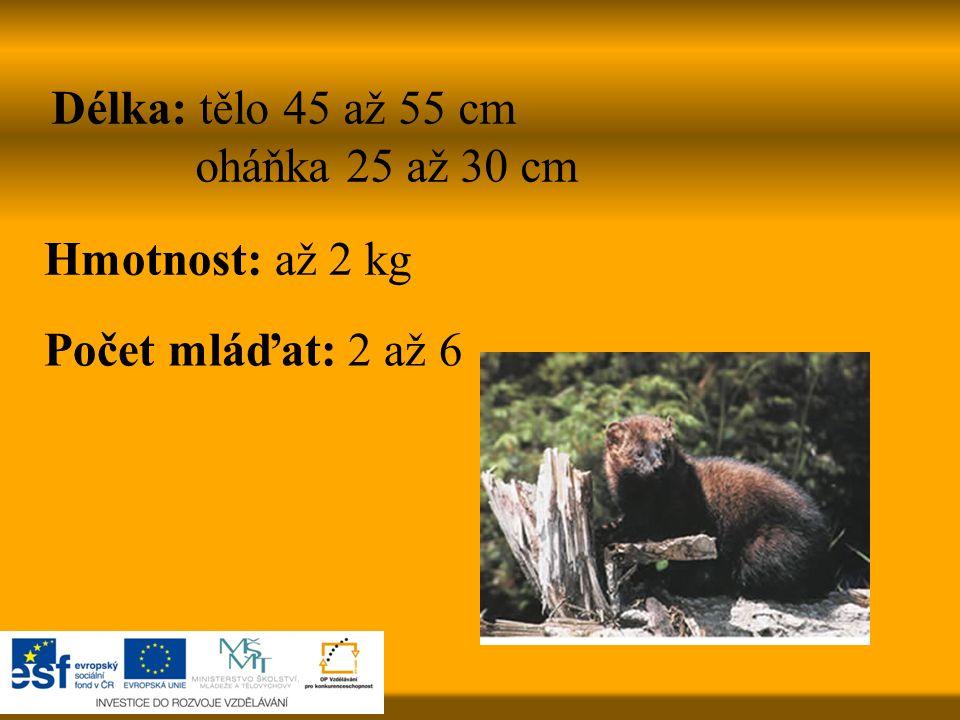 Délka: tělo 45 až 55 cm oháňka 25 až 30 cm Hmotnost: až 2 kg Počet mláďat: 2 až 6