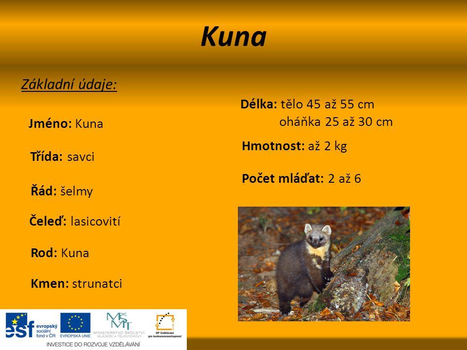 Rozdělení U nás žijí dva druhy: kuna lesní a kuna skalní.