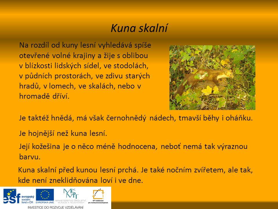 Kuna skalní Na rozdíl od kuny lesní vyhledává spíše otevřené volné krajiny a žije s oblibou v blízkosti lidských sídel, ve stodolách, v půdních prosto
