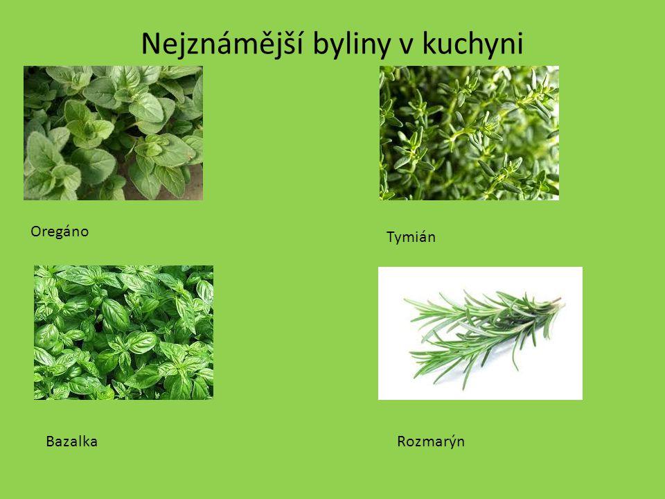 Nejznámější byliny v kuchyni Oregáno Bazalka Tymián Rozmarýn