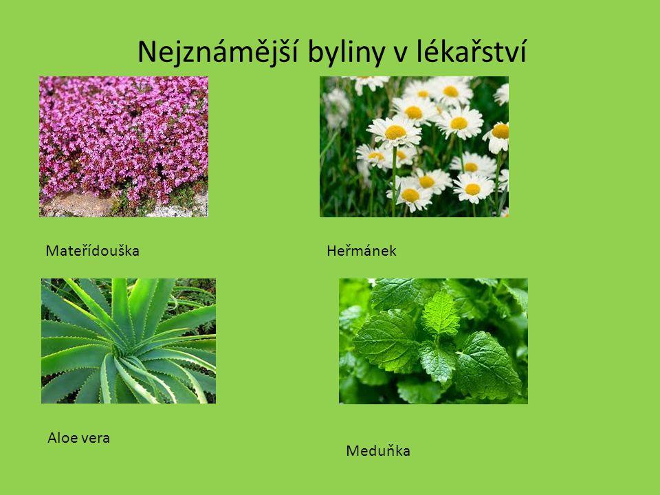 Nejznámější byliny v lékařství MateřídouškaHeřmánek Aloe vera Meduňka