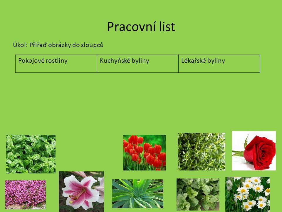 Pracovní list Úkol: Přiřaď obrázky do sloupců Pokojové rostlinyKuchyňské bylinyLékařské byliny