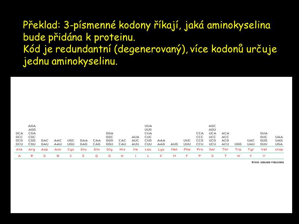 Překlad: 3-písmenné kodony říkají, jaká aminokyselina bude přidána k proteinu. Kód je redundantní (degenerovaný), více kodonů určuje jednu aminokyseli