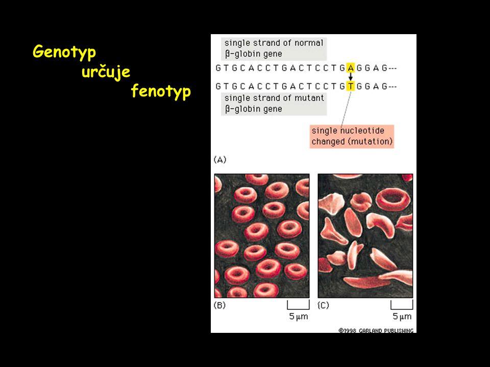 Genotyp určuje fenotyp