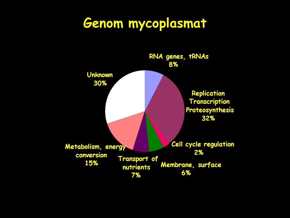 RNA genes, tRNAs 8% Replication, Transcription, Proteosynthesis 32% Cell cycle regulation 2% Membrane, surface 6% Transport of nutrients) 7% Metabolism, energy conversion 15% Unknown 30% Genom mycoplasmat