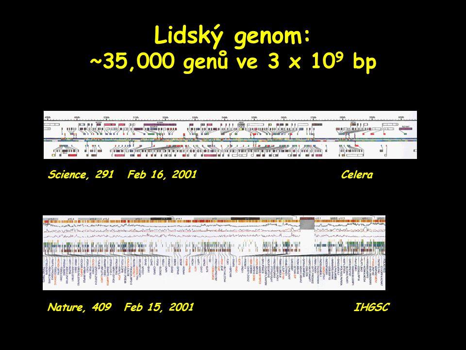 Lidský genom: ~35,000 genů ve 3 x 10 9 bp Nature, 409 Feb 15, 2001 IHGSC Science, 291 Feb 16, 2001 Celera