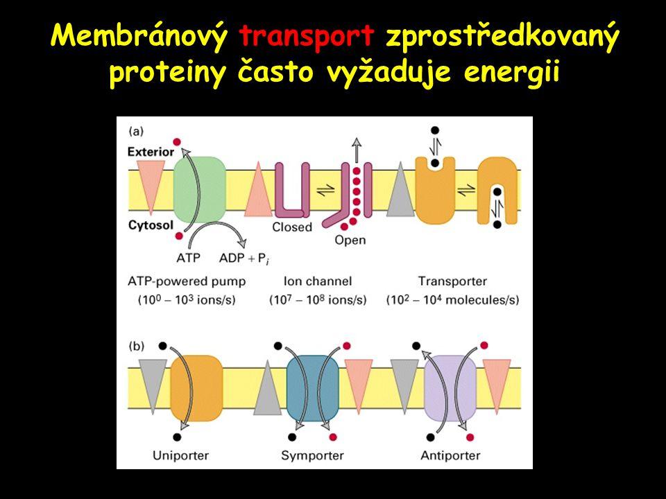 Membránový transport zprostředkovaný proteiny často vyžaduje energii Figure 15-3