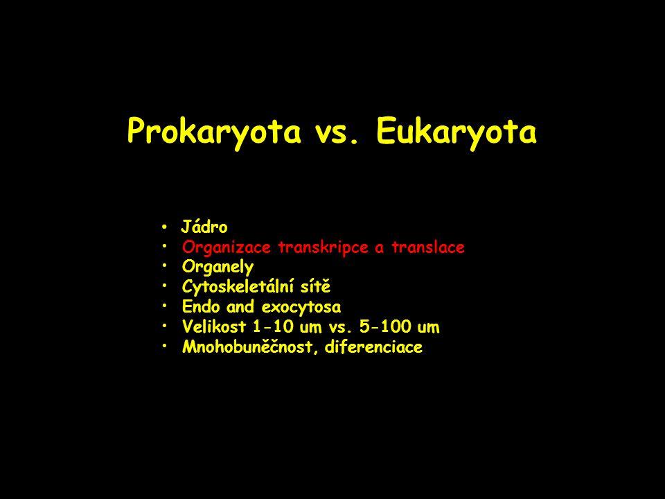 Prokaryota vs. Eukaryota Jádro Organizace transkripce a translace Organely Cytoskeletální sítě Endo and exocytosa Velikost 1-10 um vs. 5-100 um Mnohob