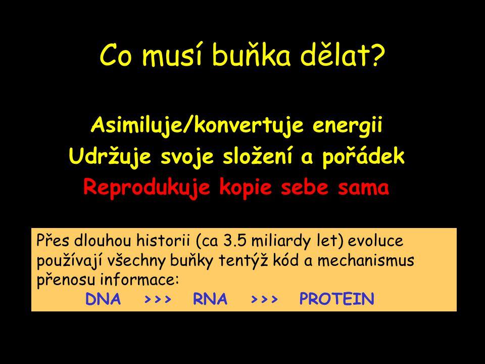 Co musí buňka dělat? Asimiluje/konvertuje energii Udržuje svoje složení a pořádek Reprodukuje kopie sebe sama Přes dlouhou historii (ca 3.5 miliardy l
