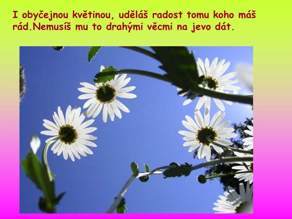I obyčejnou květinou, uděláš radost tomu koho máš rád.Nemusíš mu to drahými věcmi na jevo dát.