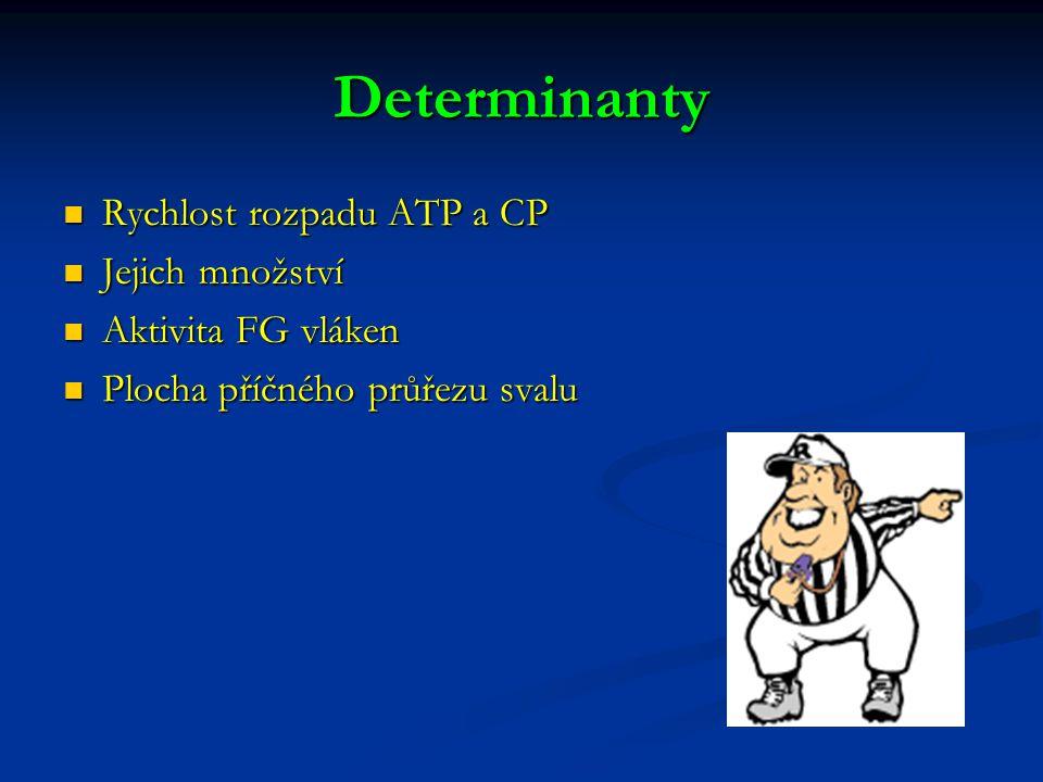 Determinanty Rychlost rozpadu ATP a CP Rychlost rozpadu ATP a CP Jejich množství Jejich množství Aktivita FG vláken Aktivita FG vláken Plocha příčného průřezu svalu Plocha příčného průřezu svalu
