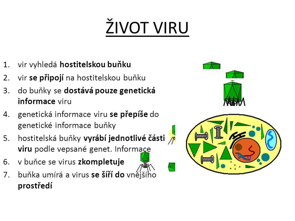 ŽIVOT VIRU 1.vir vyhledá hostitelskou buňku 2.vir se připojí na hostitelskou buňku 3.do buňky se dostává pouze genetická informace viru 4.genetická in
