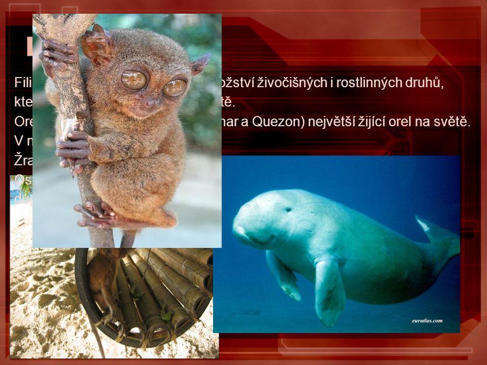 Fauna Filipíny jsou rezervací velkého množství živočišných i rostlinných druhů, které nenajdete nikde jinde na světě. Orel filipínský (ostrovy Davao,