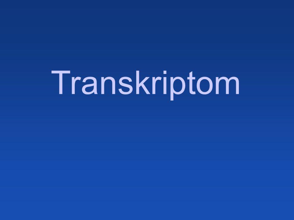 Transkriptom