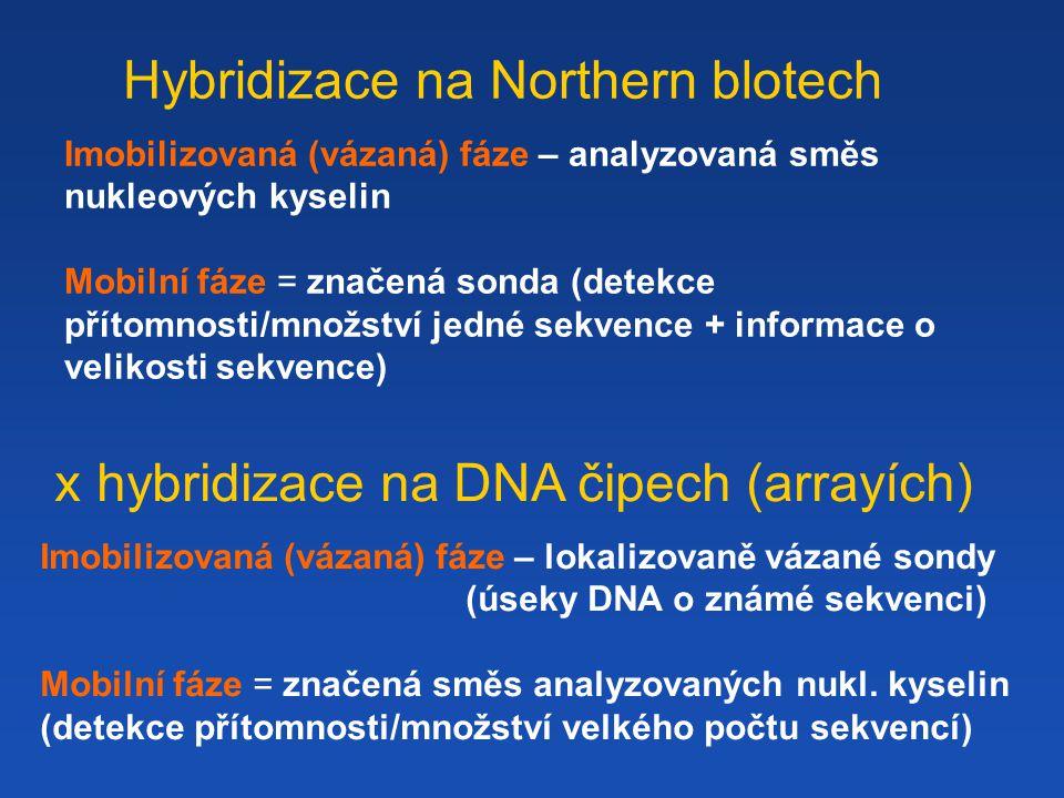 Hybridizace na Northern blotech Imobilizovaná (vázaná) fáze – analyzovaná směs nukleových kyselin Mobilní fáze = značená sonda (detekce přítomnosti/množství jedné sekvence + informace o velikosti sekvence) x hybridizace na DNA čipech (arrayích) Imobilizovaná (vázaná) fáze – lokalizovaně vázané sondy (úseky DNA o známé sekvenci) Mobilní fáze = značená směs analyzovaných nukl.