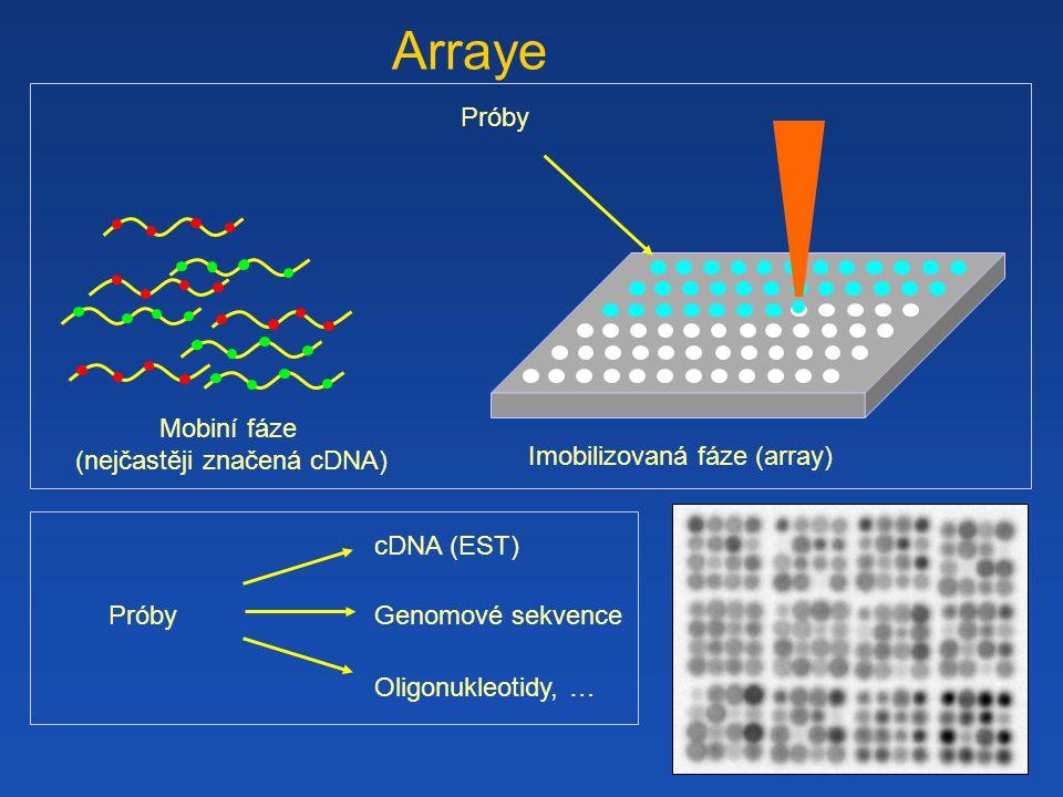 Arraye Próby PróbyPróby cDNA (EST) Genomové sekvence Oligonukleotidy, … Mobiní fáze (nejčastěji značená cDNA) Imobilizovaná fáze (array)