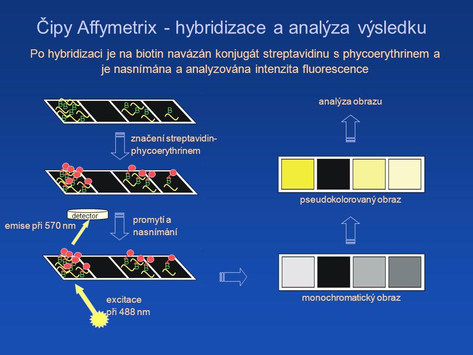 Čipy Affymetrix - hybridizace a analýza výsledku B BBBB B B B B B B B B B B B B B B značení streptavidin- phycoerythrinem B B B B B B B B B B detector promytí a nasnímání excitace při 488 nm emise při 570 nm monochromatický obraz pseudokolorovaný obraz analýza obrazu Po hybridizaci je na biotin navázán konjugát streptavidinu s phycoerythrinem a je nasnímána a analyzována intenzita fluorescence B