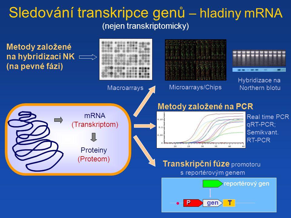 Sledování transkripce genů – hladiny mRNA (nejen transkriptomicky) DNA (Genome) mRNA (Transkriptom) Proteiny (Proteom) Microarrays/Chips Transkripční fúze promotoru s reportérovým genem Macroarrays Real time PCR qRT-PCR; Semikvant.