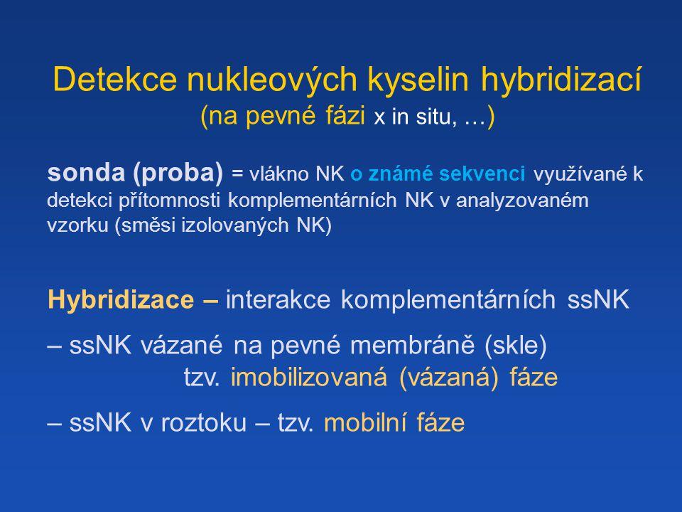 Detekce nukleových kyselin hybridizací (na pevné fázi x in situ, … ) sonda (proba) = vlákno NK o známé sekvenci využívané k detekci přítomnosti komplementárních NK v analyzovaném vzorku (směsi izolovaných NK) Hybridizace – interakce komplementárních ssNK – ssNK vázané na pevné membráně (skle) tzv.