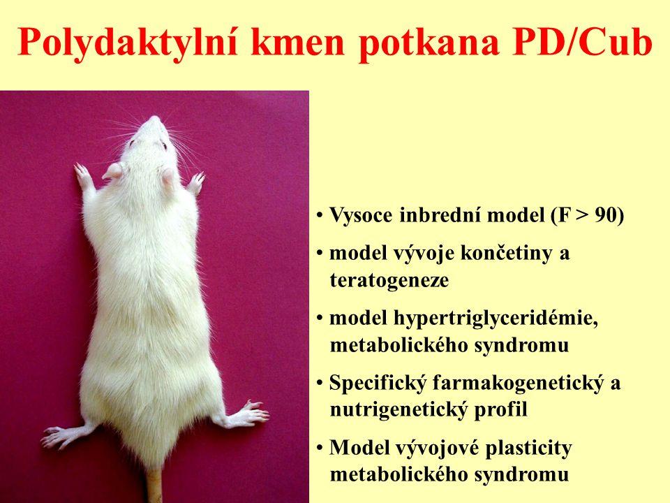Polydaktylní kmen potkana PD/Cub Vysoce inbrední model (F > 90) model vývoje končetiny a teratogeneze model hypertriglyceridémie, metabolického syndro