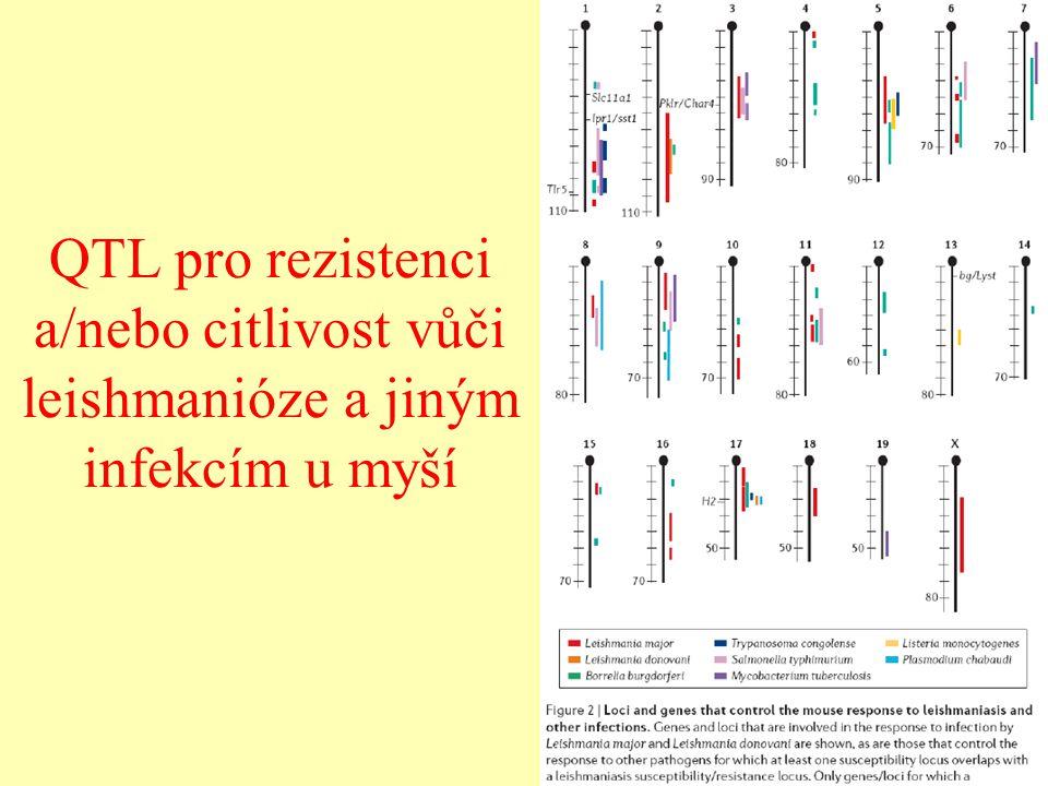 QTL pro hybridní sterilitu samců u myší White et al. 2011, Genetics