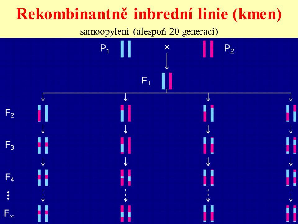Rekombinantně inbrední linie (kmen) samoopylení (alespoň 20 generací)