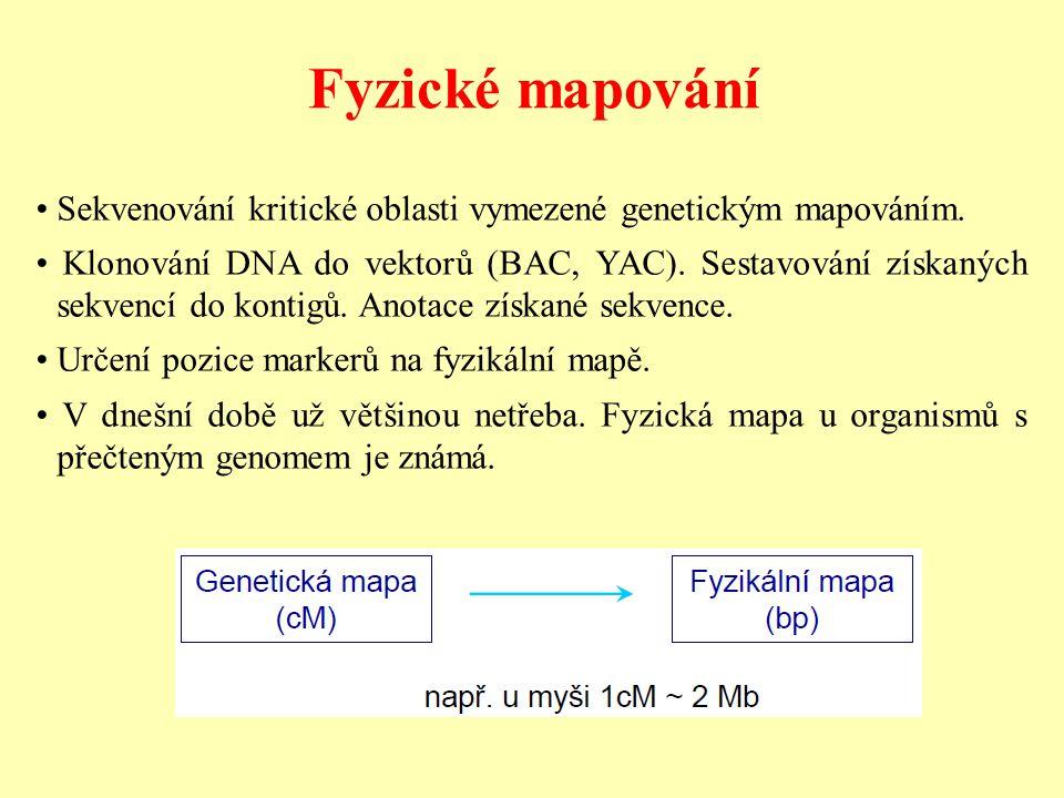 Fyzické mapování Sekvenování kritické oblasti vymezené genetickým mapováním. Klonování DNA do vektorů (BAC, YAC). Sestavování získaných sekvencí do ko
