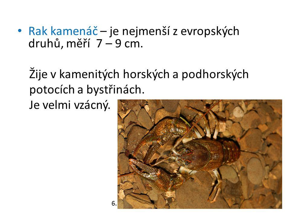 Rak kamenáč – je nejmenší z evropských druhů, měří 7 – 9 cm. Žije v kamenitých horských a podhorských potocích a bystřinách. Je velmi vzácný. 6.