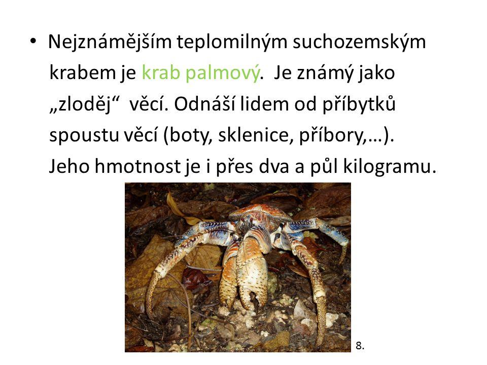 """Nejznámějším teplomilným suchozemským krabem je krab palmový. Je známý jako """"zloděj"""" věcí. Odnáší lidem od příbytků spoustu věcí (boty, sklenice, příb"""