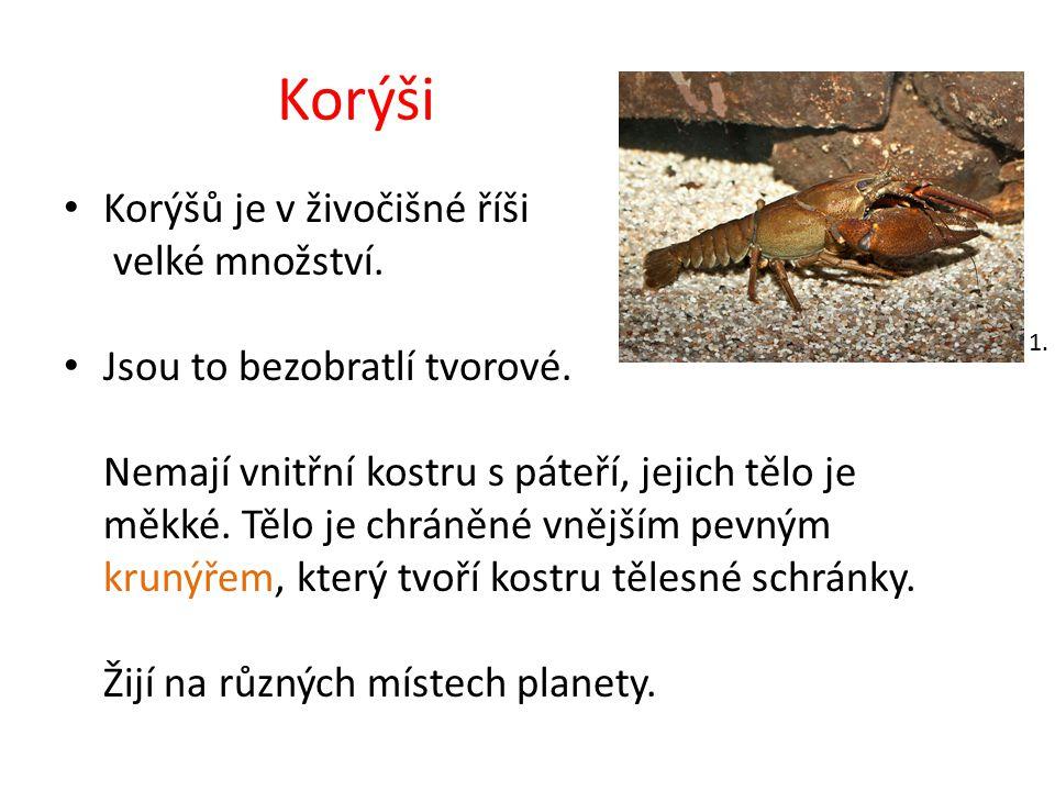 Korýši patří do kmene členovců.Mají článkované tělo a nohy.