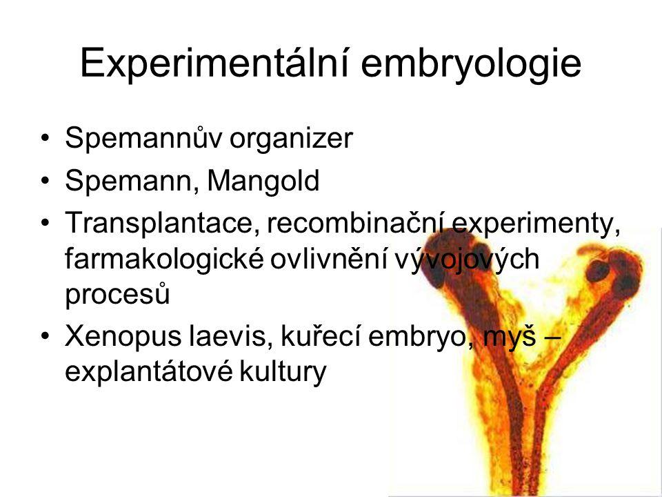 Experimentální embryologie Spemannův organizer Spemann, Mangold Transplantace, recombinační experimenty, farmakologické ovlivnění vývojových procesů Xenopus laevis, kuřecí embryo, myš – explantátové kultury