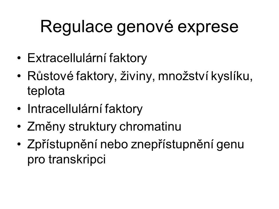 Regulace genové exprese Extracellulární faktory Růstové faktory, živiny, množství kyslíku, teplota Intracellulární faktory Změny struktury chromatinu Zpřístupnění nebo znepřístupnění genu pro transkripci