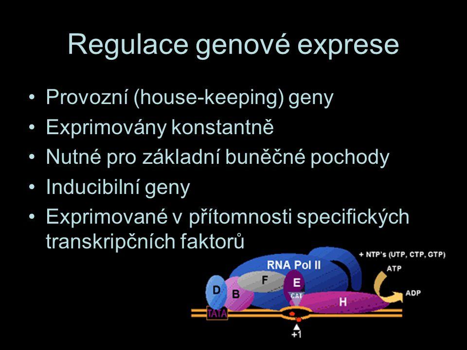 Regulace genové exprese Provozní (house-keeping) geny Exprimovány konstantně Nutné pro základní buněčné pochody Inducibilní geny Exprimované v přítomnosti specifických transkripčních faktorů