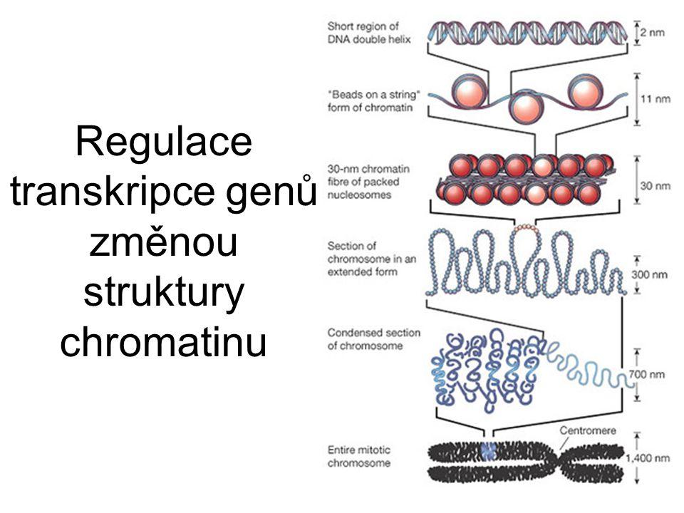 Regulace transkripce genů změnou struktury chromatinu