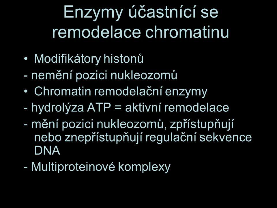 Enzymy účastnící se remodelace chromatinu Modifikátory histonů - nemění pozici nukleozomů Chromatin remodelační enzymy - hydrolýza ATP = aktivní remodelace - mění pozici nukleozomů, zpřístupňují nebo znepřístupňují regulační sekvence DNA - Multiproteinové komplexy