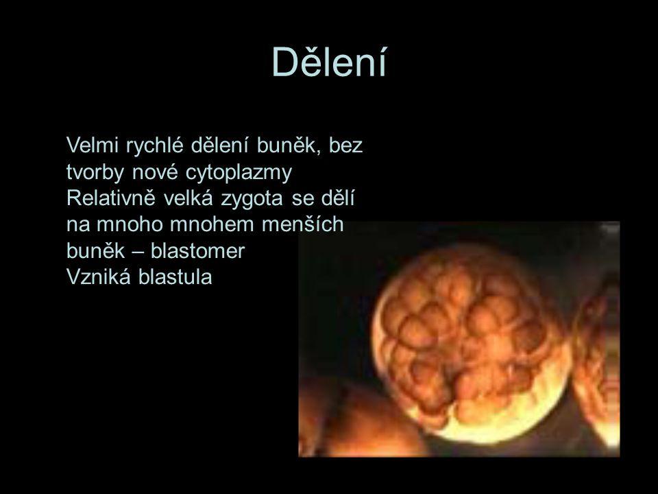 Diferenciace buněk