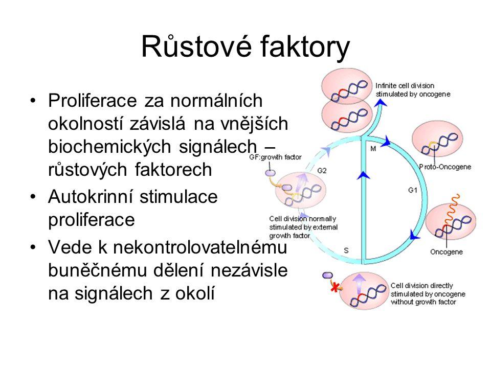 Růstové faktory Proliferace za normálních okolností závislá na vnějších biochemických signálech – růstových faktorech Autokrinní stimulace proliferace Vede k nekontrolovatelnému buněčnému dělení nezávisle na signálech z okolí