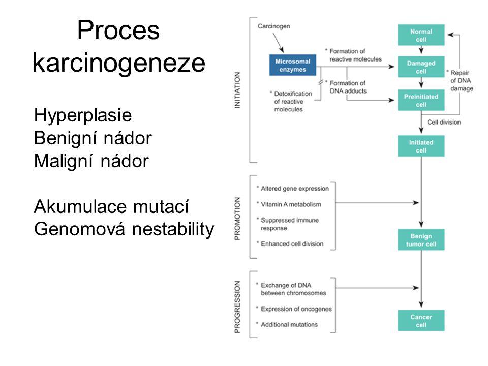 Proces karcinogeneze Hyperplasie Benigní nádor Maligní nádor Akumulace mutací Genomová nestability