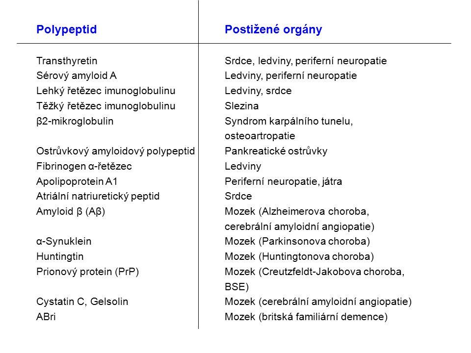 PolypeptidPostižené orgány TransthyretinSrdce, ledviny, periferní neuropatie Sérový amyloid ALedviny, periferní neuropatie Lehký řetězec imunoglobulinuLedviny, srdce Těžký řetězec imunoglobulinu Slezina β2-mikroglobulinSyndrom karpálního tunelu, osteoartropatie Ostrůvkový amyloidový polypeptidPankreatické ostrůvky Fibrinogen α-řetězecLedviny Apolipoprotein A1Periferní neuropatie, játra Atriální natriuretický peptidSrdce Amyloid β (Aβ)Mozek (Alzheimerova choroba, cerebrální amyloidní angiopatie) α-SynukleinMozek (Parkinsonova choroba) HuntingtinMozek (Huntingtonova choroba) Prionový protein (PrP)Mozek (Creutzfeldt-Jakobova choroba, BSE) Cystatin C, GelsolinMozek (cerebrální amyloidní angiopatie) ABriMozek (britská familiární demence)