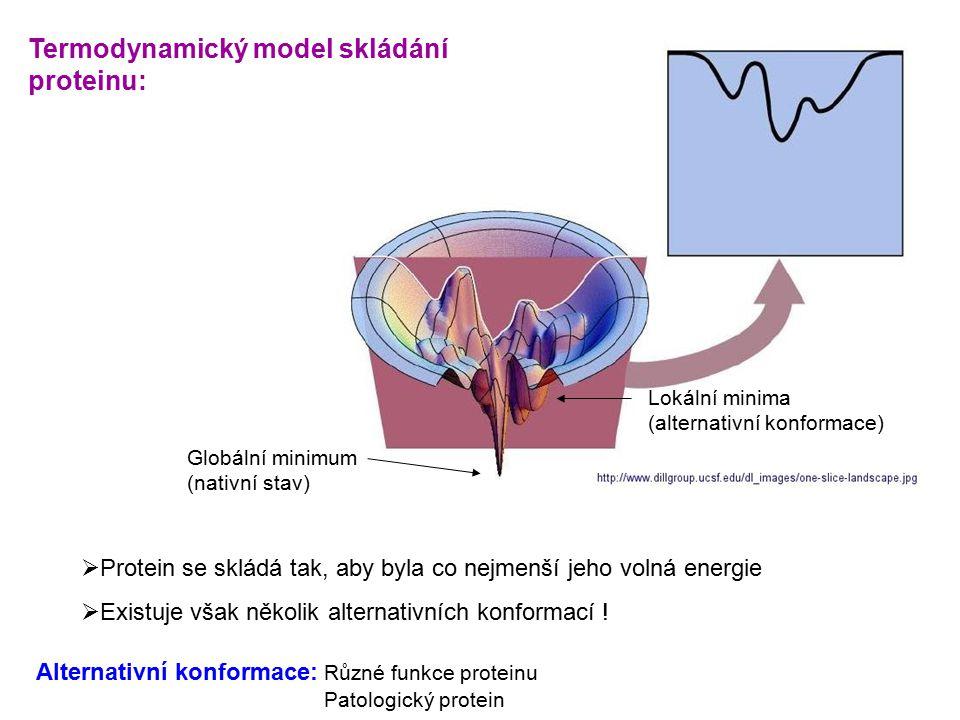 Globální minimum (nativní stav) Lokální minima (alternativní konformace)  Protein se skládá tak, aby byla co nejmenší jeho volná energie  Existuje však několik alternativních konformací .